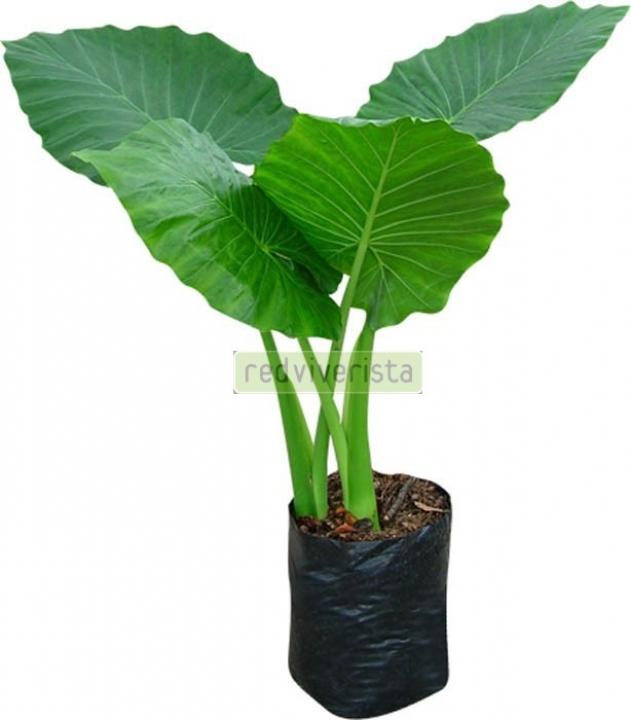Plantas for Viveros en toluca
